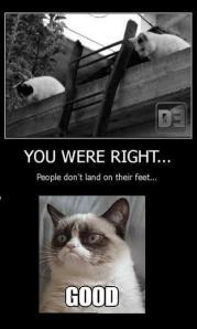 cat humour2